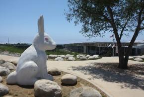 Newport Beach City Hall and Bunnies, photo by Mike Glenn