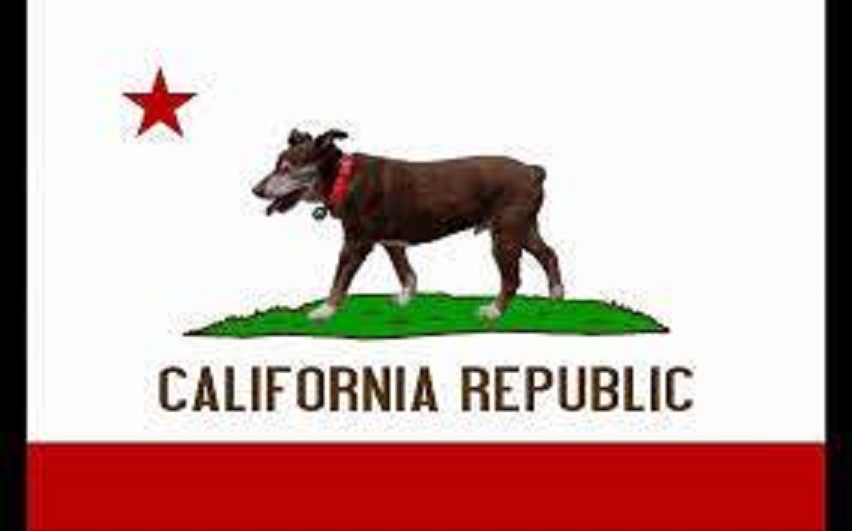 California Flag with Dog, credit unknown