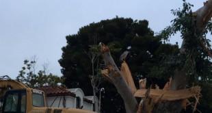 bird habitat destroyed
