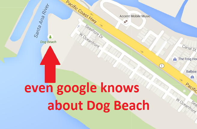 dog beach google