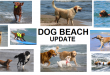 Dog Beach Update