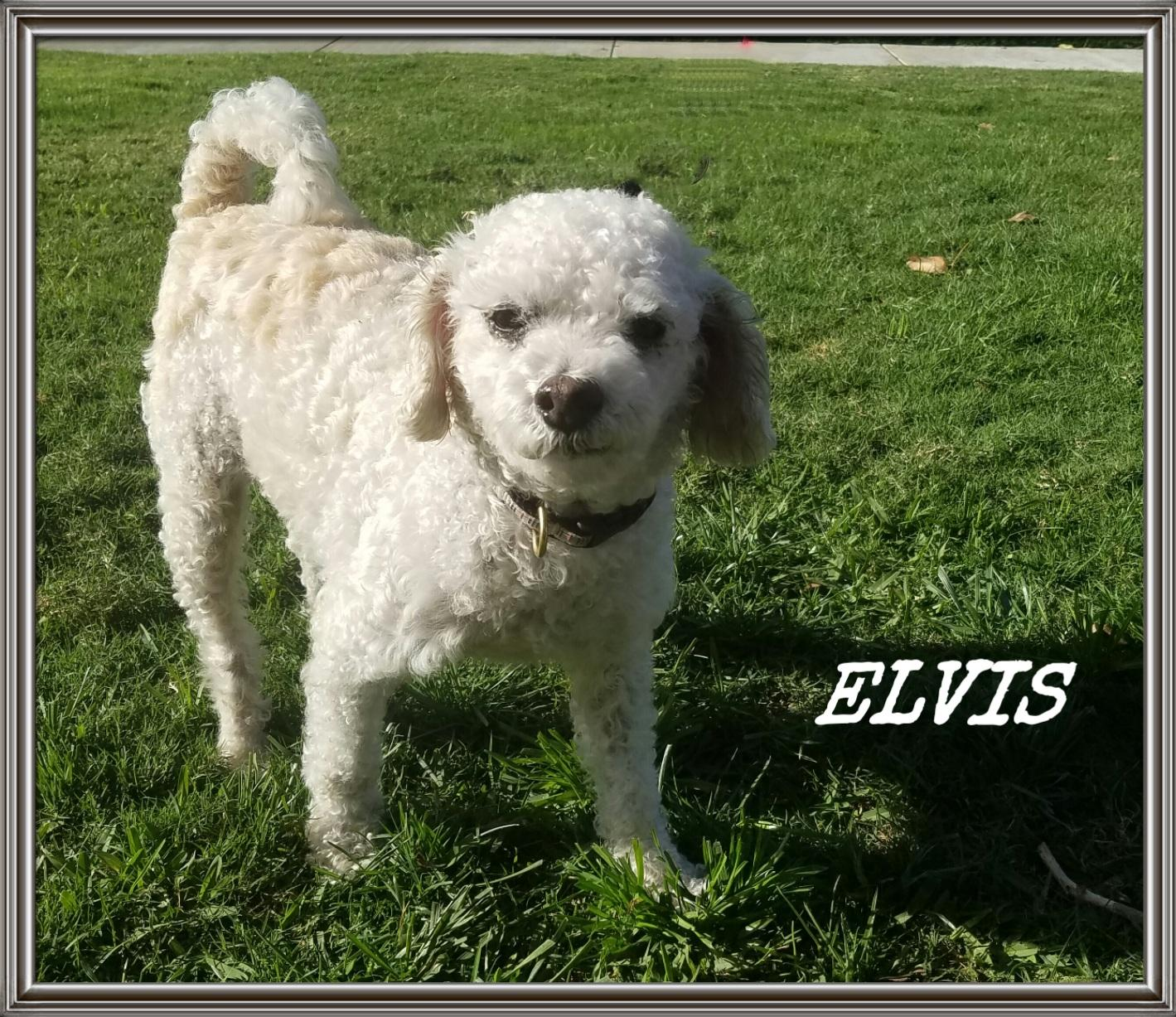 pet-of-the-week-elvis